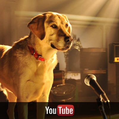 Beverly Hills Chihuahua on YouTube