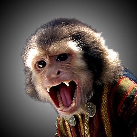 Jack the Monkey