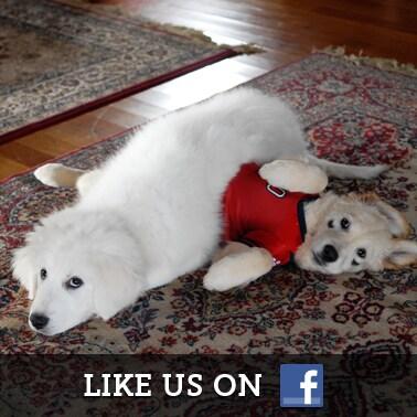 Santa Buddies Facebook
