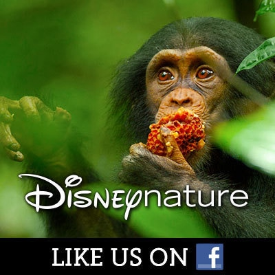 Disneynature on Facebook