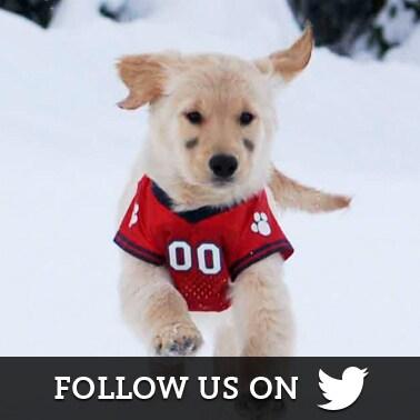 Snow Buddies Twitter