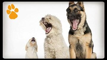 What Does A Basenji Dog Sound Like