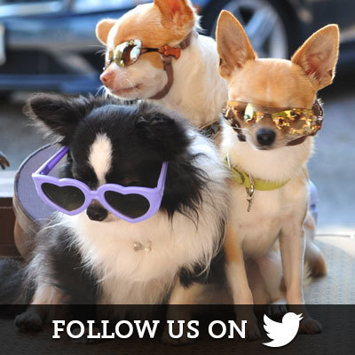 Beverly Hills Chihuahua on Twitter