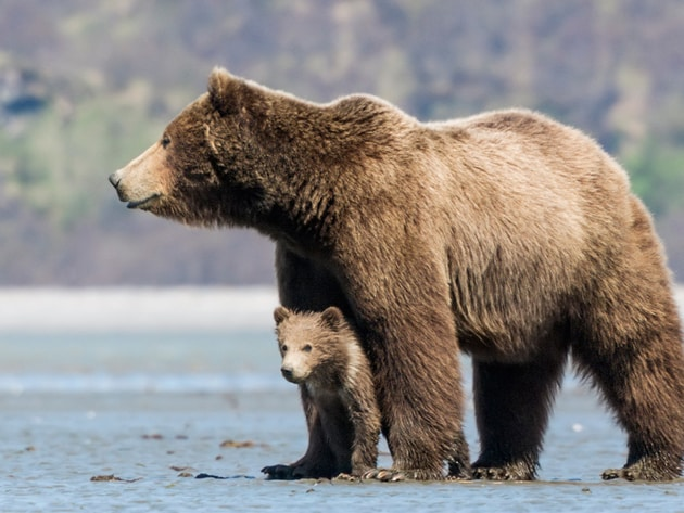This Earth Day you're invited into the world of Bears. From Disneynature comes a story all parent...