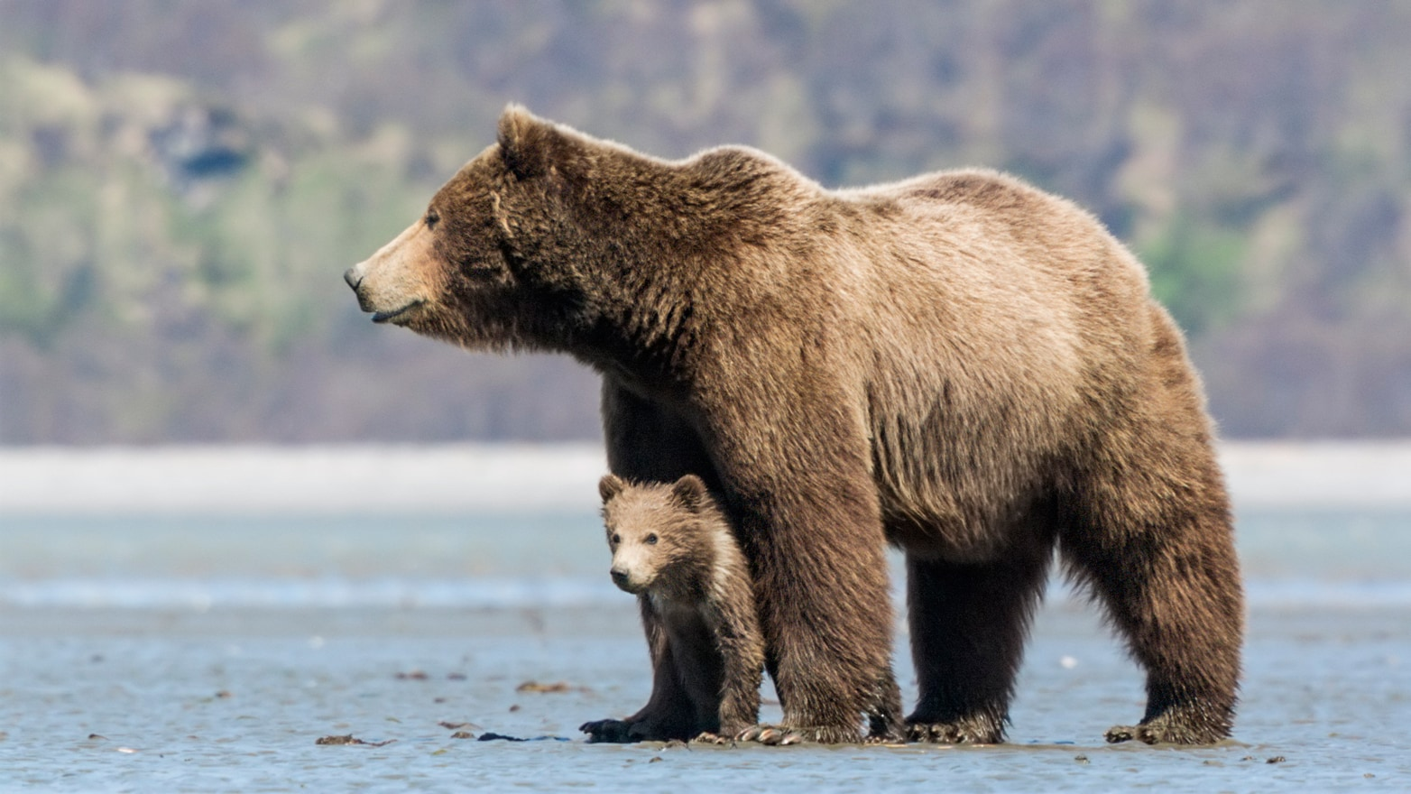 Staying Safe around Bears - Bears (U.S. National Park Service)