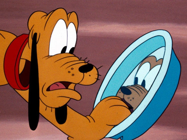 Pluto is shocked to find that his bone is missing from his dish.