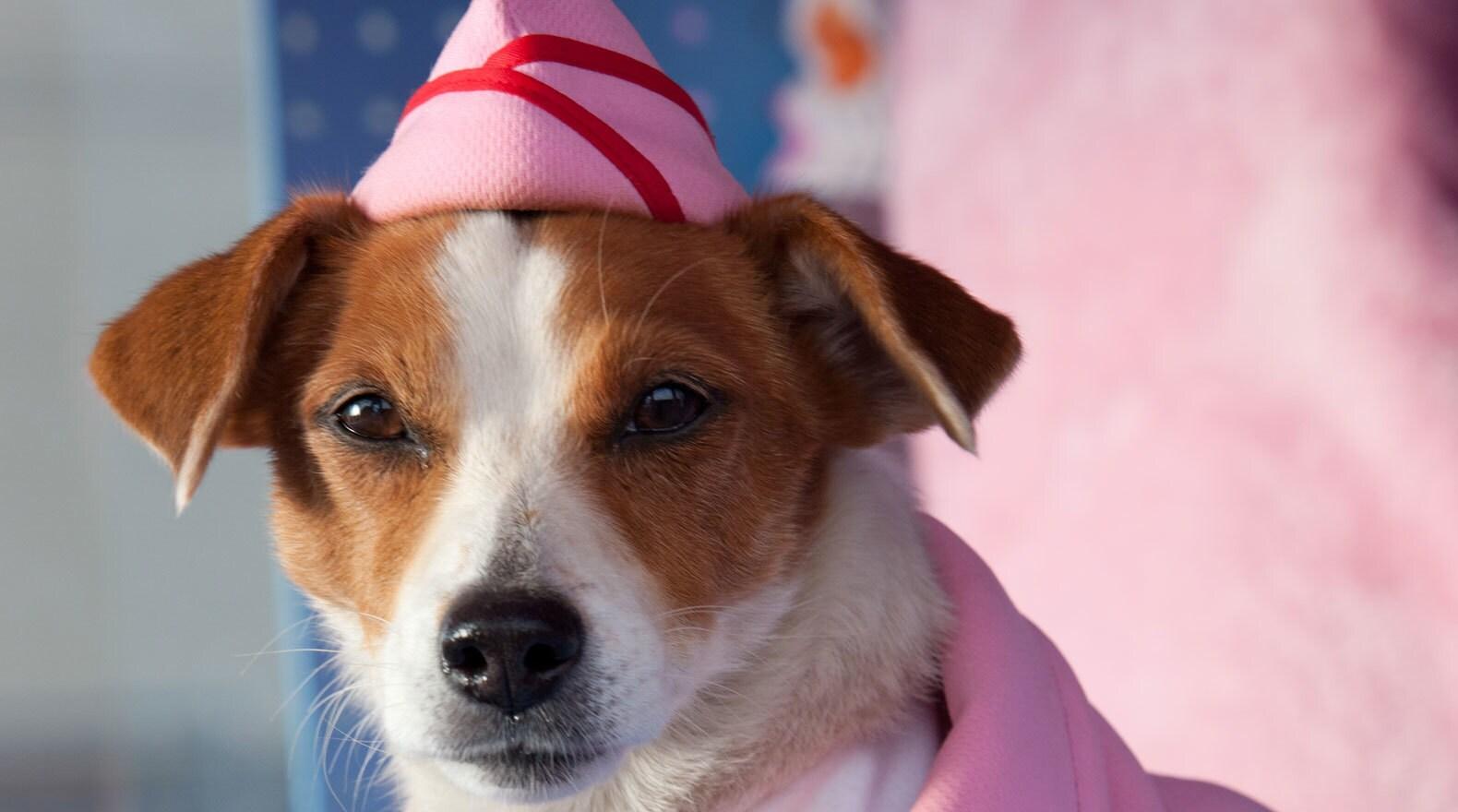 Dog wearing pink hat in Santa Paws 2