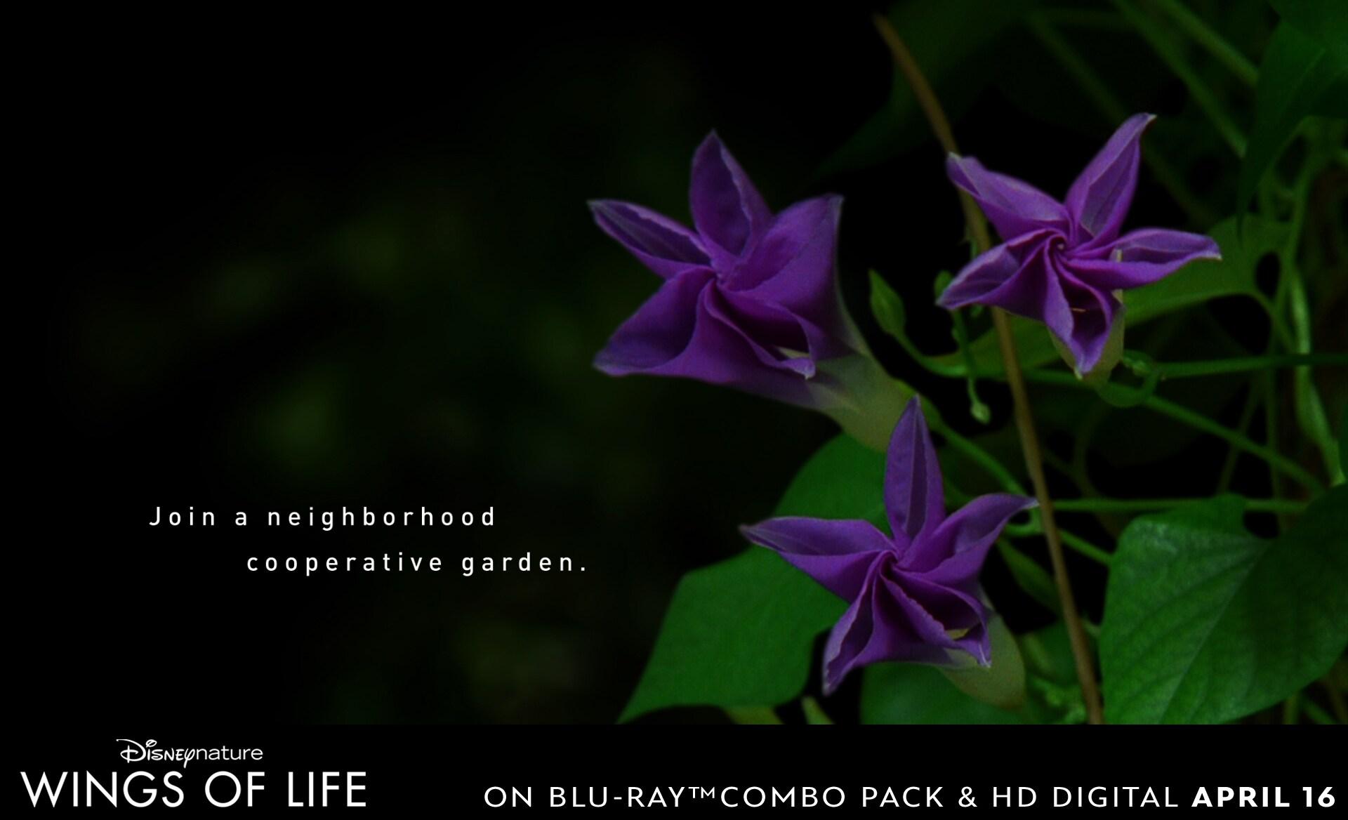 Join a neighborhood cooperative garden.