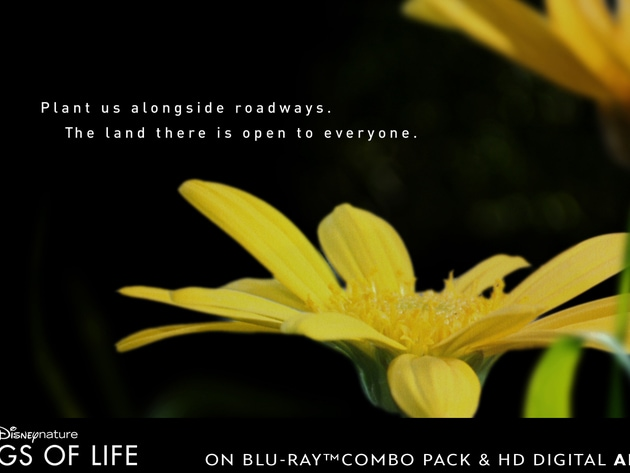 Plant flowers alongside roadways. The land there is open to everyone.