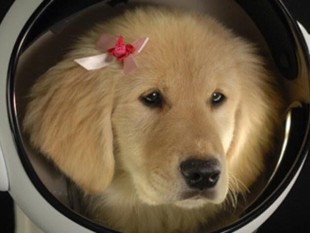 Rosebud is super stylish in her space helmet.