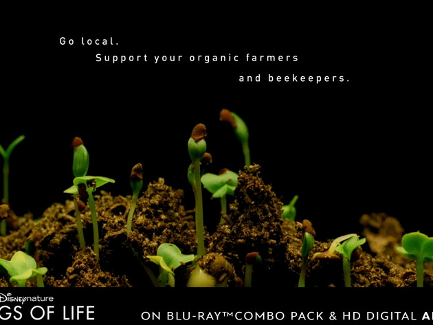 Go local. Support your organic farmers and beekeepers.