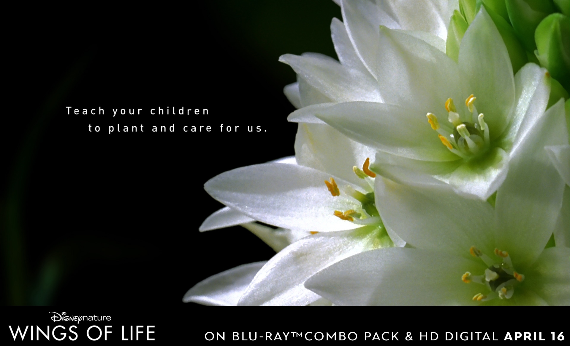 Teach your children to care for the environment by showing them to care for plants and flowers.