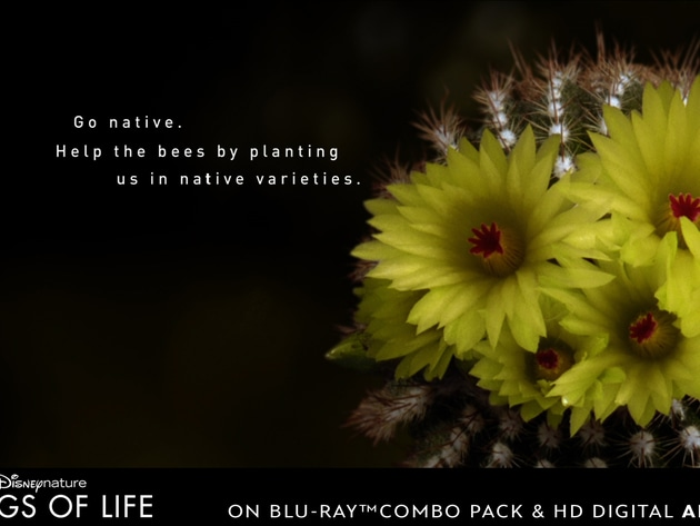 Go native. Help the bees by planting flowers in native varieties.