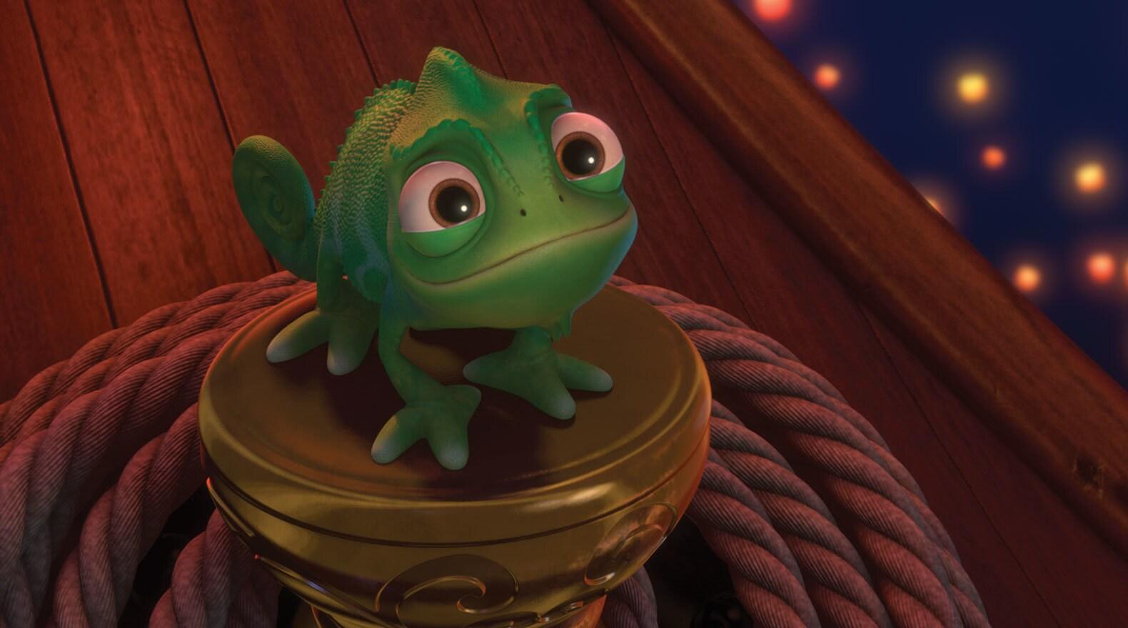 Pascal the chameleon