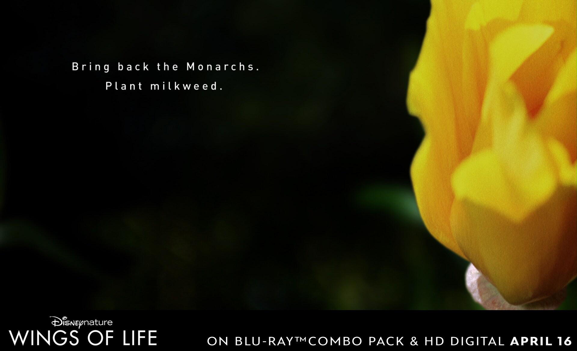 Help bring back the Monarch butterflies by planting milkweed.