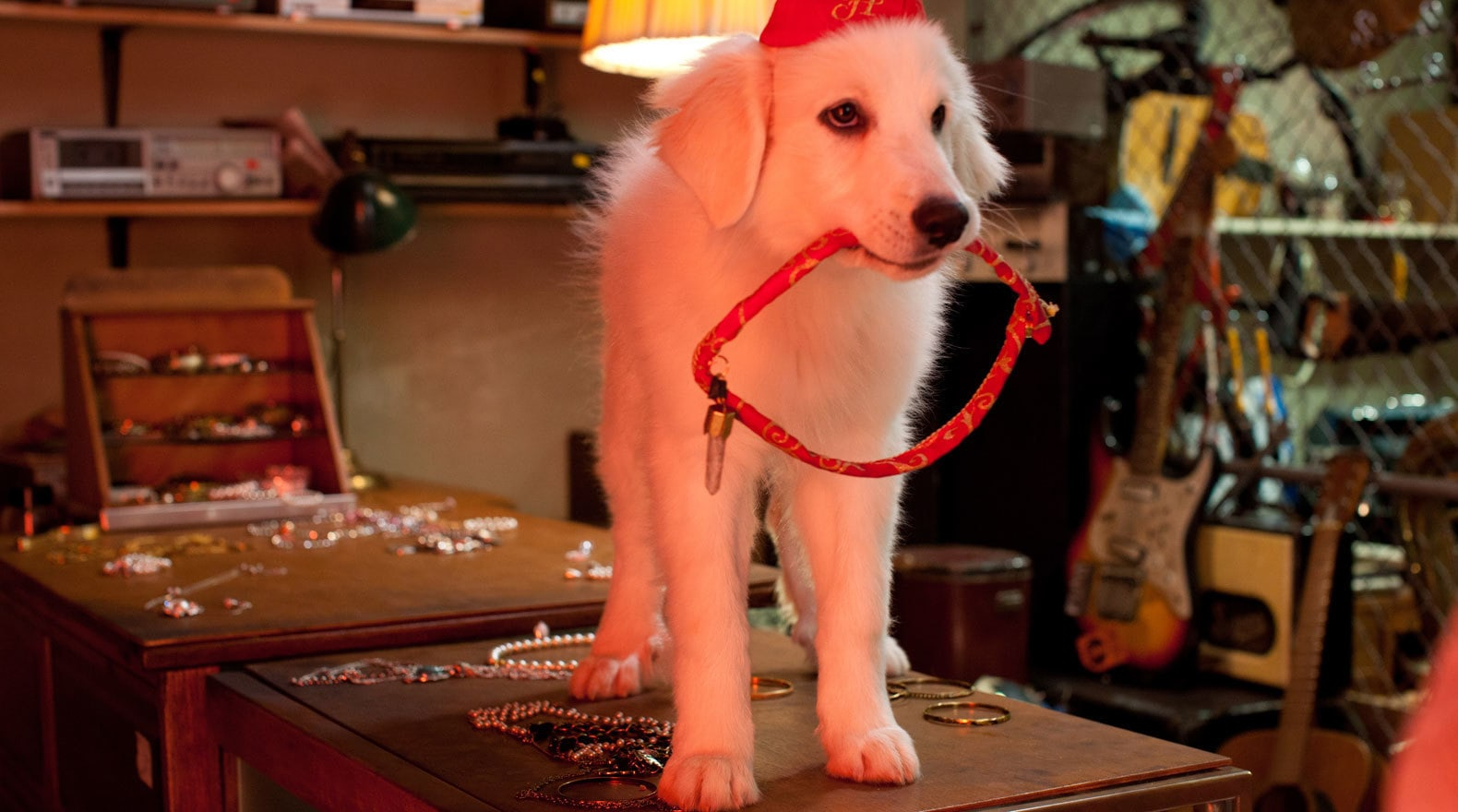 Santa's Dog holding a red rope