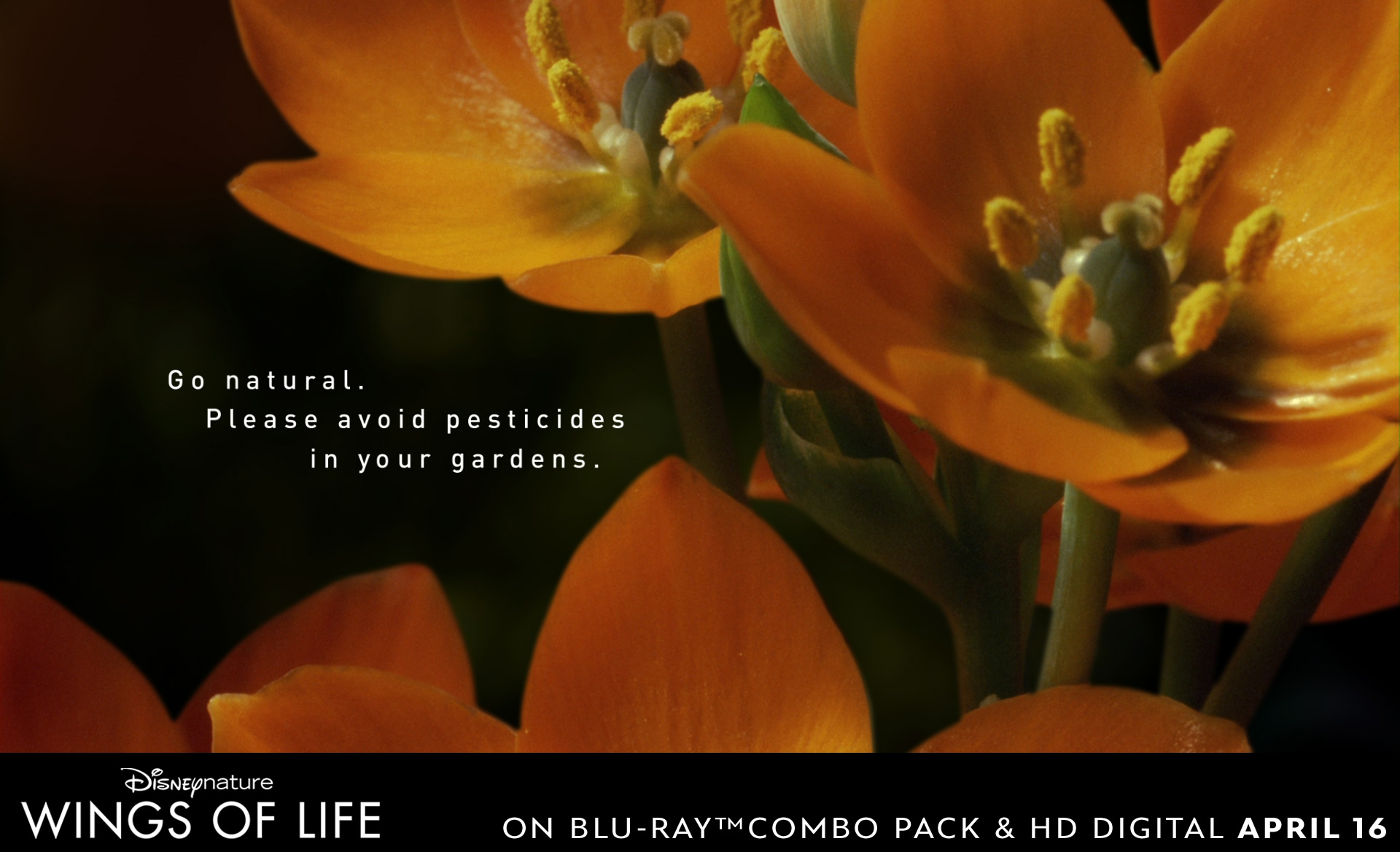 Go natural by avoiding pesticides in your garden.