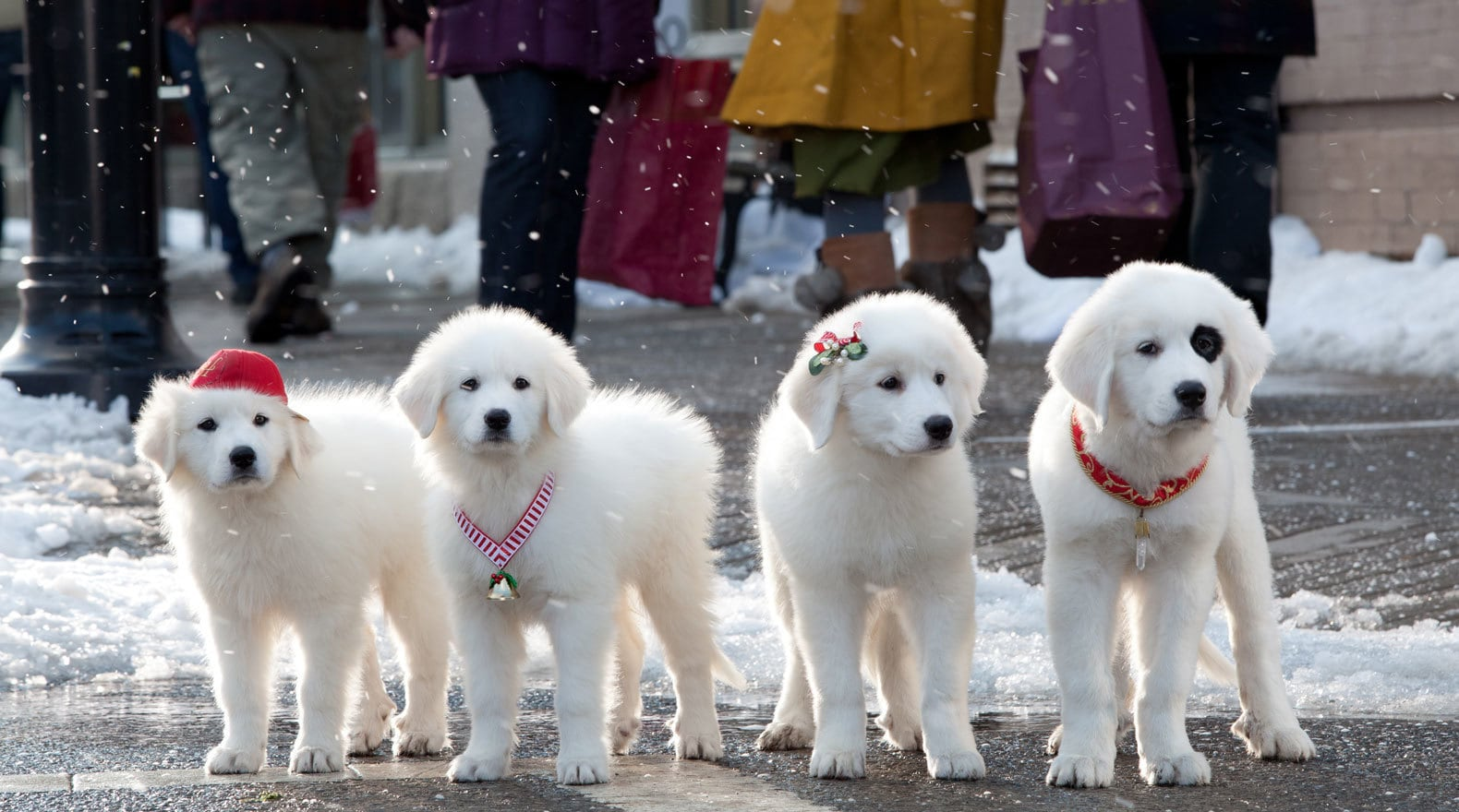 Santa Pups standing in the street in the movie Santa Paws 2: The Santa Pups