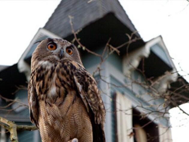 This owl takes his job seriously.
