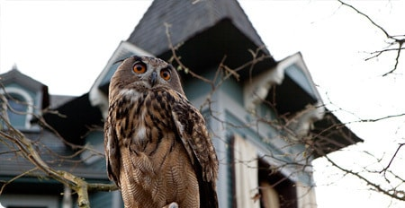 This owl takes his job seriously.
