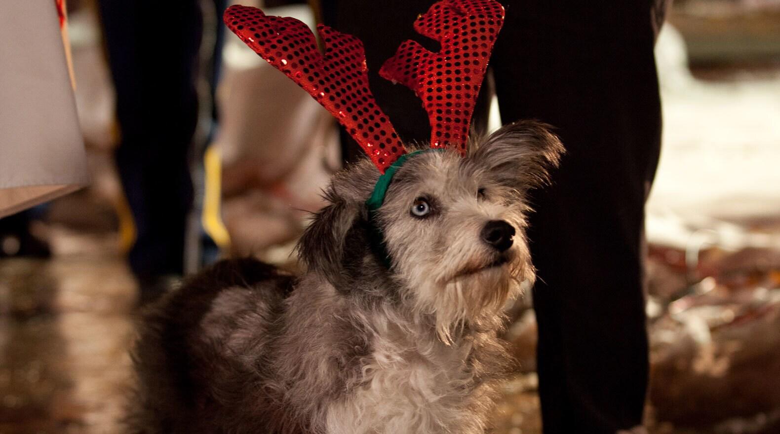 Dog wearing an antler hat