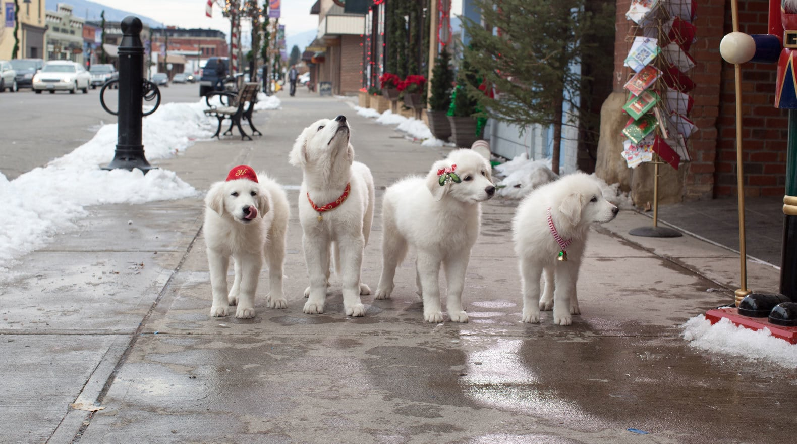 Hope, Jingle, Charity and Noble walking on the street