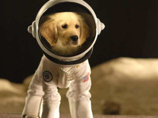 To boldly go where no dog has gone before.
