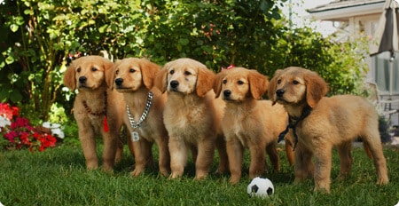 All the buddies ready for soccer!
