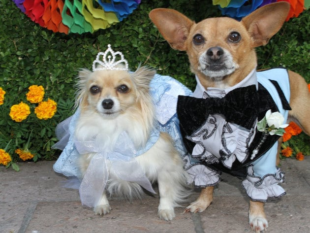 beverly chihuahua beverly hills chihuahua gallery disney movies 7165