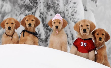 All the Buddies playing in the snow together.