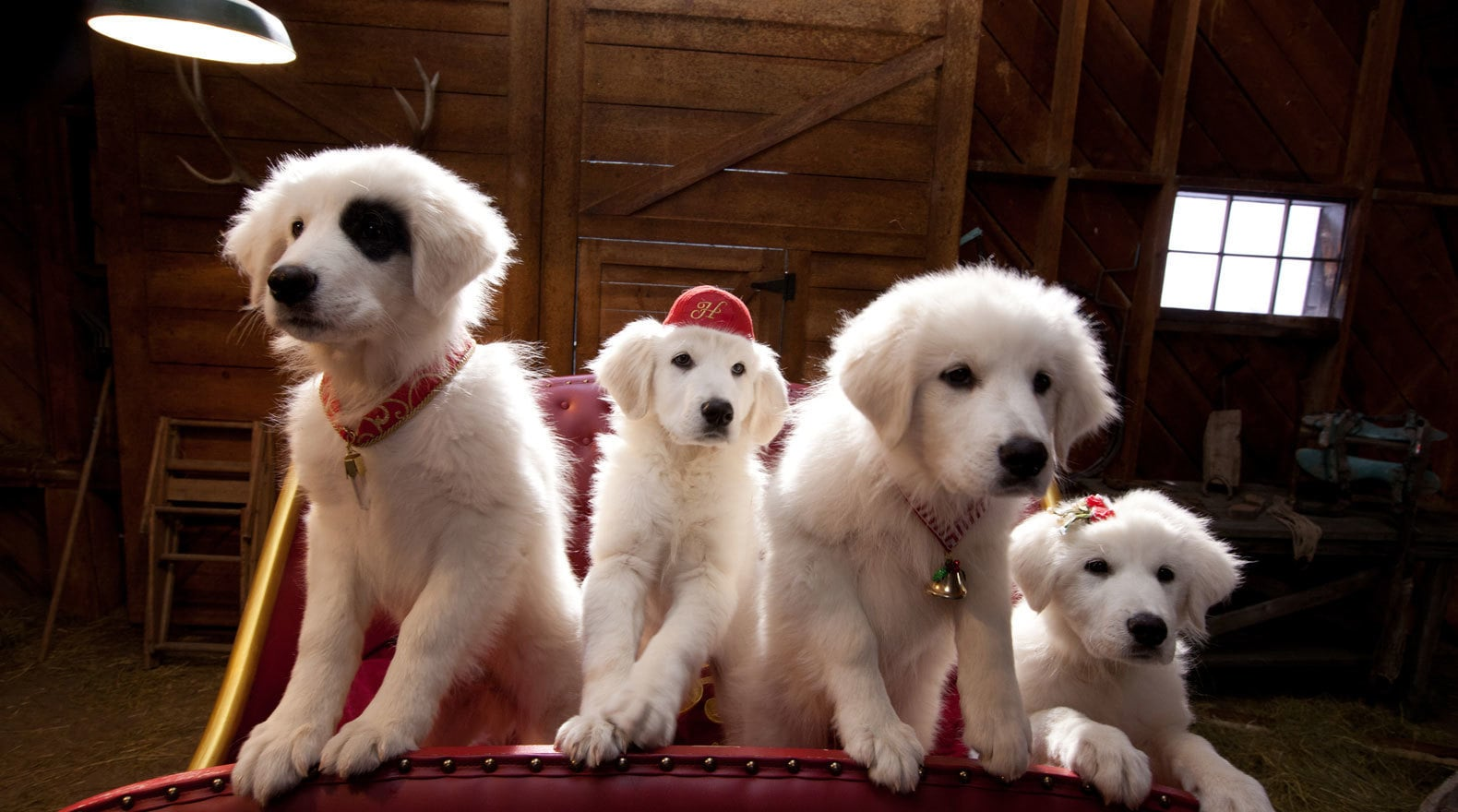 all four of Santa's puppies Hope, Jingle, Charity and Noble