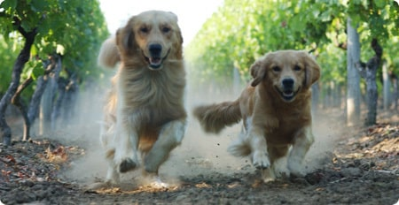 Buddy and Molly on the Run!