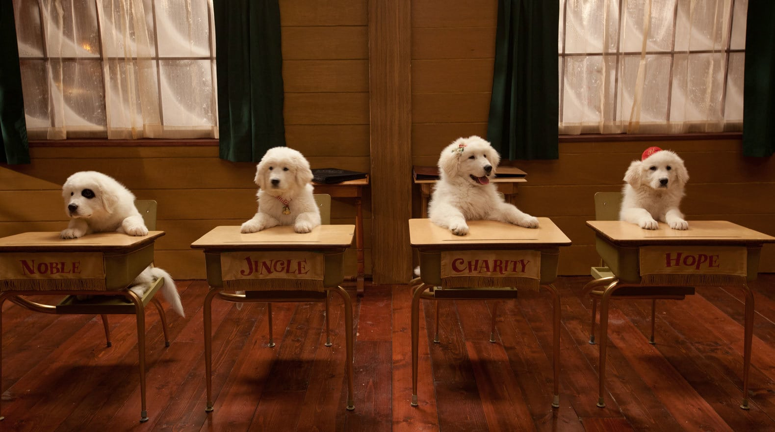two puppies sitting at a school desk