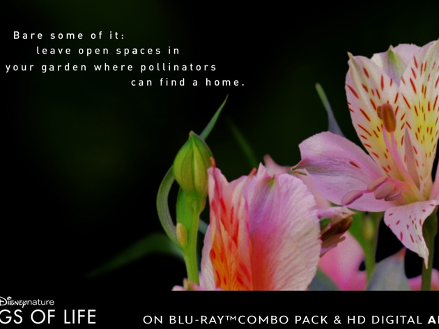 Leave open spaces in your garden where pollinators can find a home.