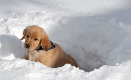 Mudbud takes some time off to play in the snow