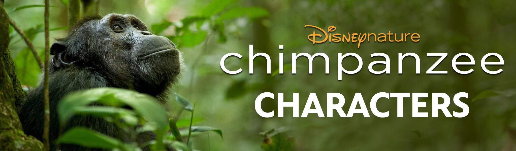 Chimpanzee Characters Mini Hero