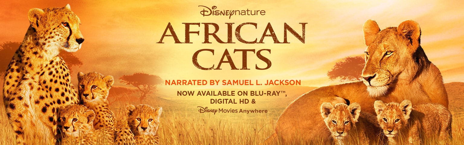 African Cats Updated Homepage