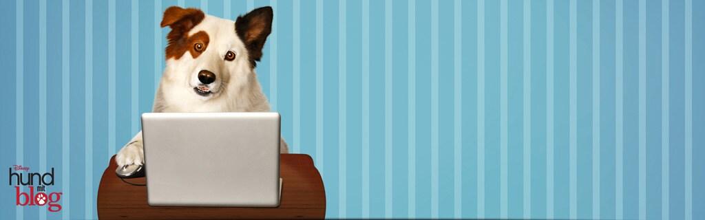 Hund mit Blog SH