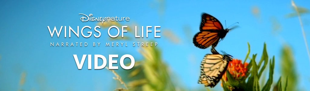 Wings of Life Video
