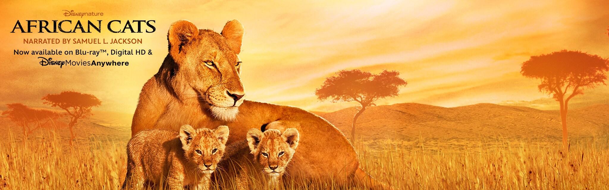 African Cats Hero