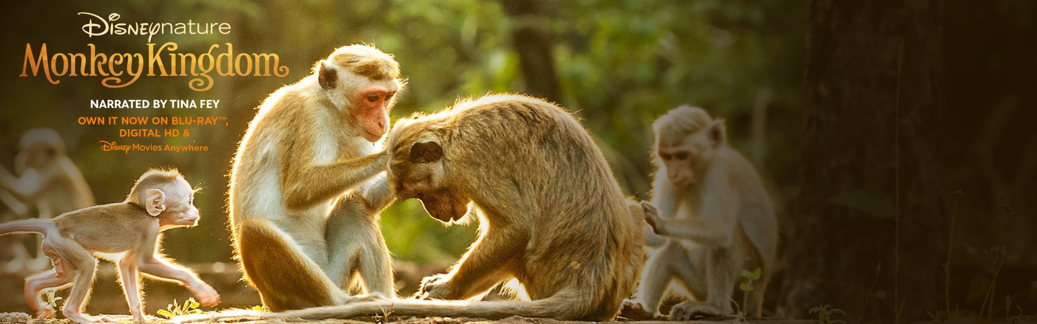Monkey Kingdom- Disney Nature Homepage