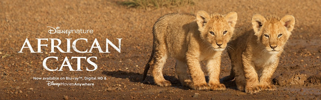 African Cats Updated Video Page