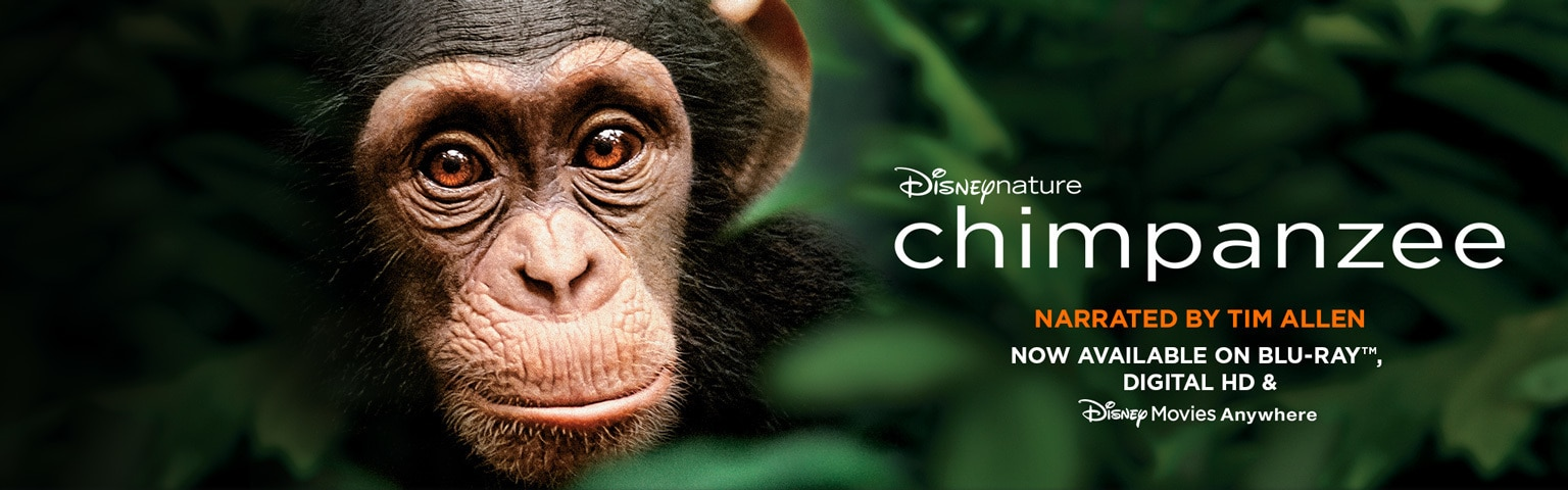 chimp movie