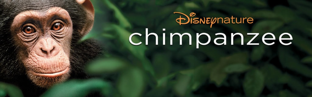 Chimpanzee - Disneynature homepage