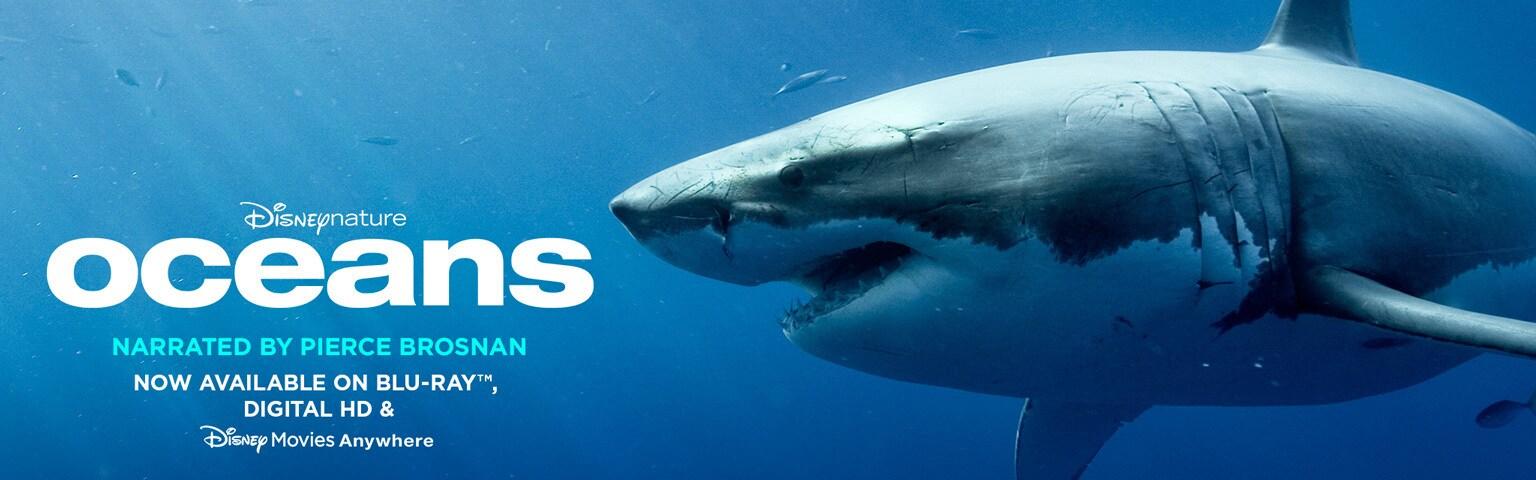 Oceans Updated Homepage Hero