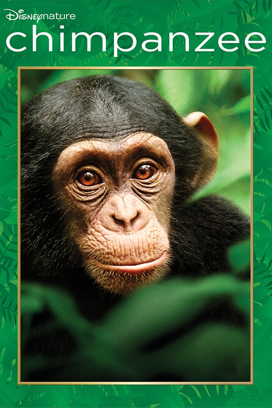 Disneynature Chimpanzee movie poster