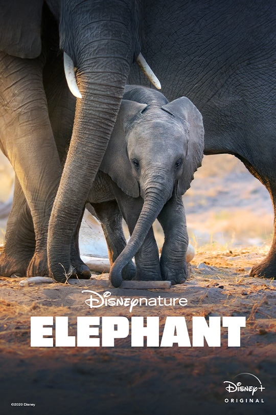 Disneynature's Elephant