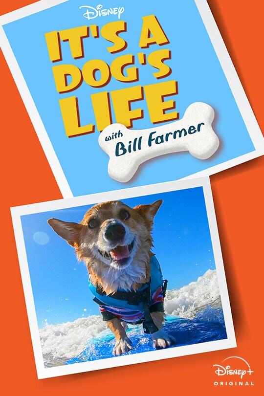 Disney   It's A Dog's Life with Bill Farmer