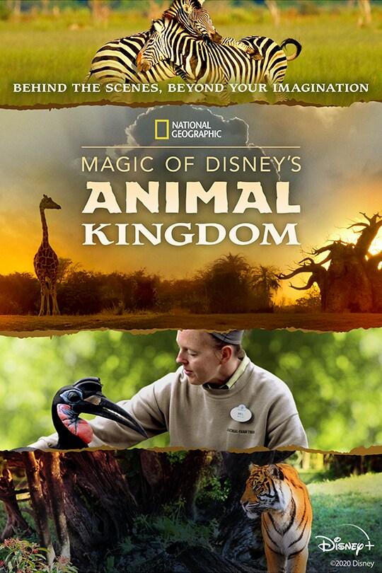 National Geographic | Magic of Disney's Animal Kingdom poster