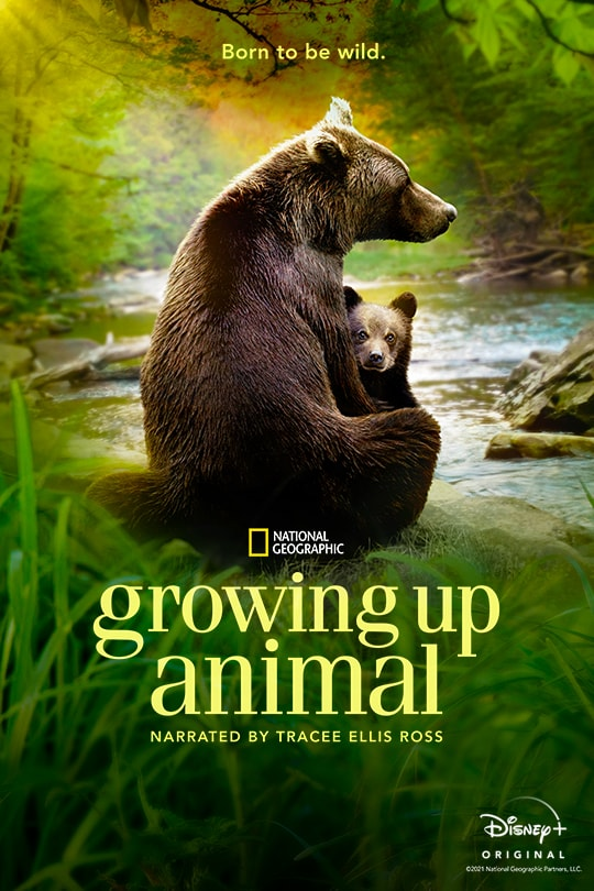 Born to be wild. | National Geographic | Growing Up Animal | Narrated by Tracee Ellis Ross | Disney+ Original | movie poster